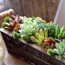 Fantastic Succulents and Where to Find Them