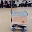 This Goldfish Can Steer Its Own Tank