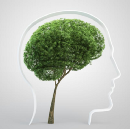 Environmentalists, Turn Your Left Brain Off