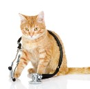 Would you know if your cat is sick?