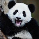 What Grizzly and Panda can teach you about the good life (or: how to make sense of conflicting…