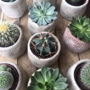 Why I left my corporate job in fashion for houseplants