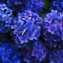 What is Purple Prose, Beige Prose, and Blue Language?