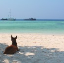 To Run With The Dogs of Thailand