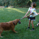What Digital Natives Can Learn from Dogs