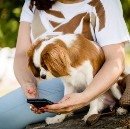 New App Allows Dogs to Talk Directly to Veterinarians