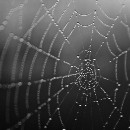 The Spiderweb Strategy