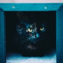 Schroedinger's cat: how we are obscuring people's potential in organisations