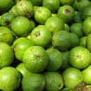 Life, Lessons and Guavas