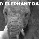 What If There Were No Elephants Left?