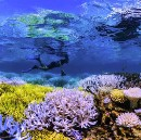 """Chasing Coral"" to Save Humanity"