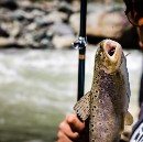 Trout fishing in Kashmir. A story about food, tourism, death and hope.
