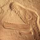 Fossilized culture, not lack of funding, put news media on deathwatch
