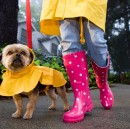 Tips to take care of your pet during monsoon :