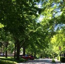 The Magic of Tree-Lined Streets