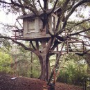 The Eternal Treehouse
