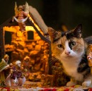 Cats Demand Rightful Place In Nativity Scene With Sheep, Oxen, Donkey