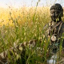 Learning from Jack Kornfield: Do The Work