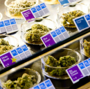 Can weed really treat epilepsy?