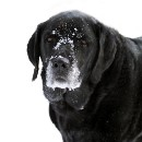 Photographing a Black Dog in the Snow