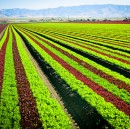 Your Salad's Troubles with Sustainable Farming