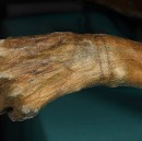 It's official: Ötzi the Iceman has the oldest tattoos in the world