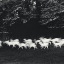 "Paul Caponigro's ""Running White Deer, County Wicklow, Ireland, 1967"" — Amy Miller for #PhotosWeLove"