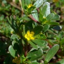 "Purslane: A ""Superfood"" Without a Marketing Team"