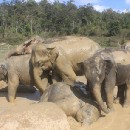 Coming Face-to-Face with Elephants