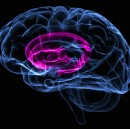 Faulty Circuits: OCD and the Brain