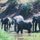 Elephants hate kale and other lessons in bringing conservation and development together