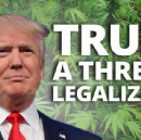Trump toughens laws for marijuana use, to further efforts of stopping anyone, anywhere, from ever…