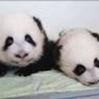 Mei Lun and Mei Huan
