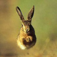 Middlemarch Hare