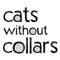cats without collars