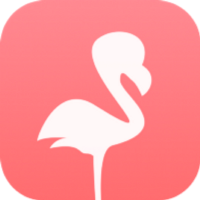 Flamingo Blog