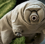 Tardigrade DNA inserted into human cells gives them X-ray resistance