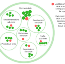 Enhancing Holacracy-driven environments with the use of OKRs