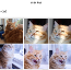How Google's New Photos App Can Tell Cats From Dogs