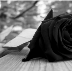Go to the profile of TheBlackRose