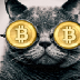 Go to the profile of CryptoCAT