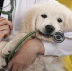 Go to the profile of Animal Care Clinic — Inkster