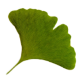 Go to the profile of Gingko