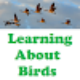 Go to the profile of Birds & Babies