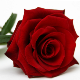 Go to the profile of London Flowers 24 Hours