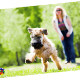 Go to the profile of Healthy Paws Pet Insurance