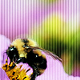 Go to the profile of Bee