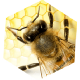 Go to the profile of Bee Man Removal & Relocation