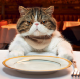 Lunch With Cat