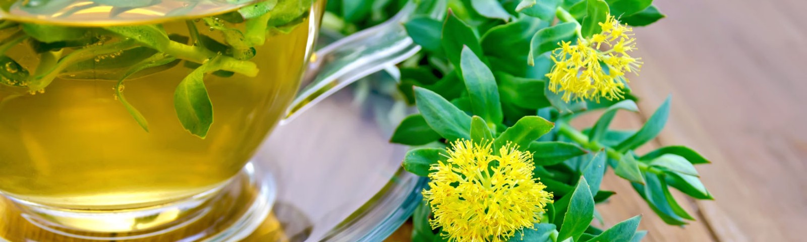 Rhodiola Rosea Benefits for Weight Loss, Anxiety and Depression
